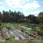 敷地の南側にはお隣の畑が見えます畑の向こうはR299号線です(2017年10月)