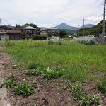 現地より蓼科山を望む。2017年6月撮影