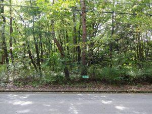 前面道路からの敷地(2017年9月撮影)
