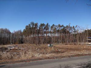 東側隣接道路より撮影(2019年1月)
