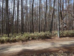 南側隣接道路から撮影(2019年4月)