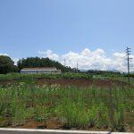 前面道路から東方向を撮影・八ケ岳の眺望有り(2019年7月)