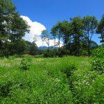 西側道路から物件を撮影。奥に八ケ岳の眺望あり。(2019年8月)