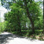 前面道路東側から撮影(2020年5月)