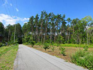 前面道路南東側から撮影(2021年9月)