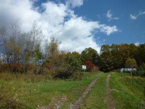 敷地南側道路を西側から撮影(2017年10月)
