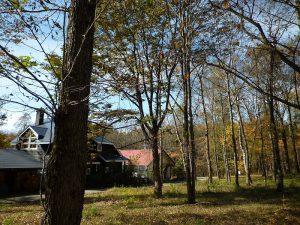 敷地から西方向を撮影(2017年11月)