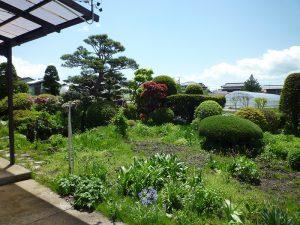 家から庭を眺める(2018年5月)