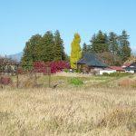 物件から北東方向に見える長円寺の紅葉(2018年11月)