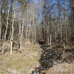 物件南側を流れる前沢川の清流