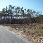 南側道路南西側から撮影(2019年4月)